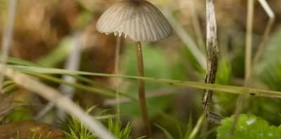 Hjälp mig sätta namn på svamparna!